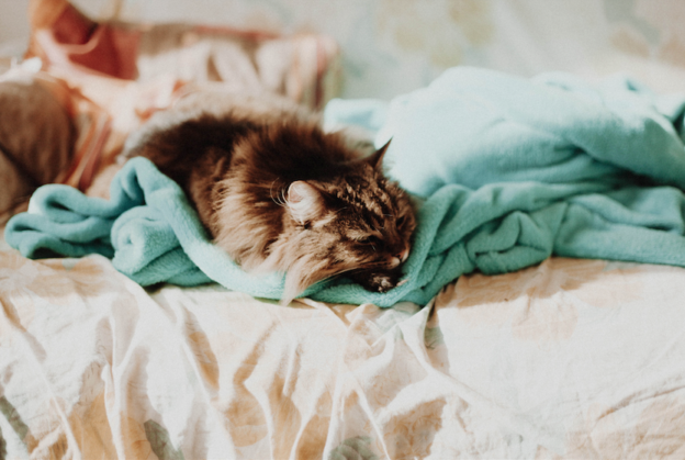 photo of a cat on a bed